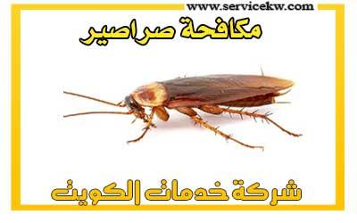 مكافحة الحشرات والصراصير