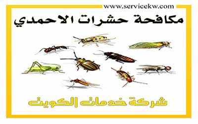 شركة مكافحة حشرات الأحمدي الكويت
